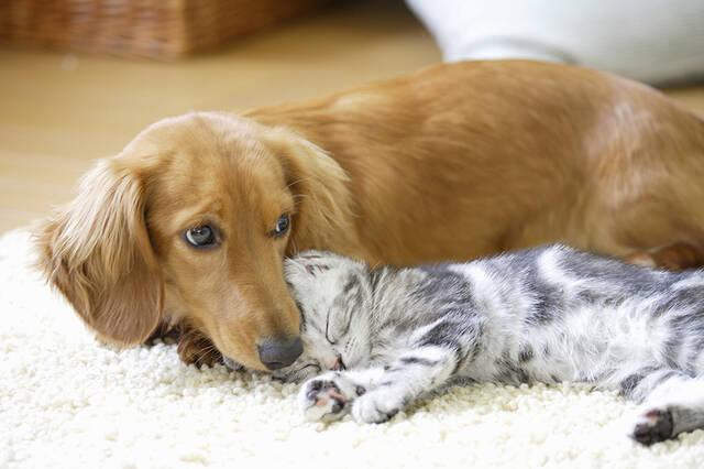 ペットのための防災。災害時、ペットを守るためにできることを考えよう